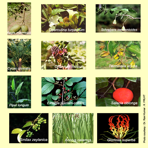 35+ easy to grow medicinal plants to make your own herbal remedies!